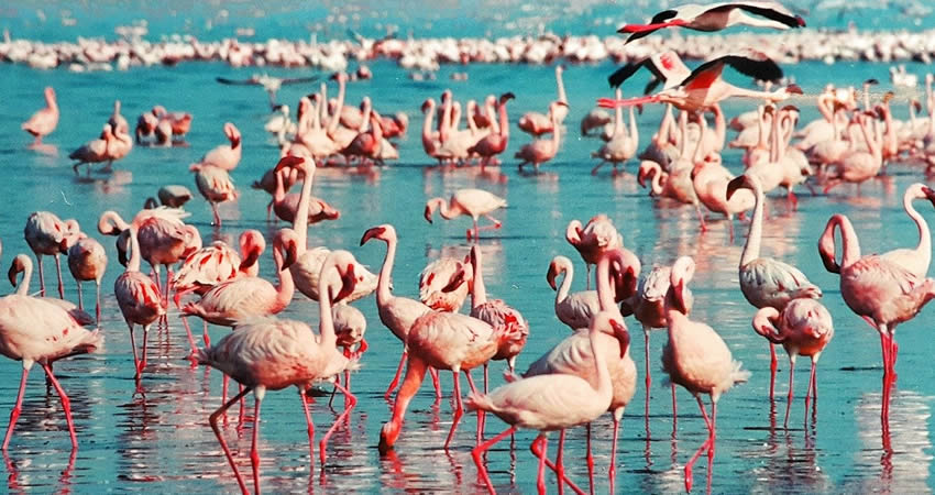 5 Days Kenya Bird Watching Safari