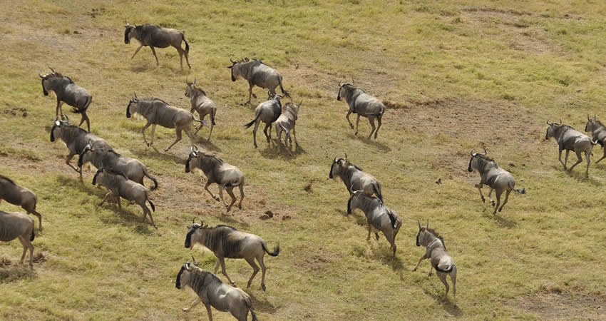 7 Days Kenya Wildlife Adventure