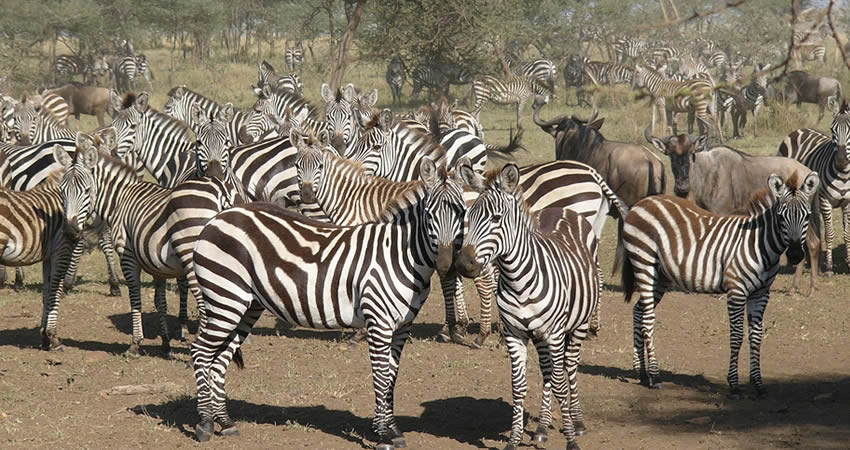 8 Days Best of Kenya Wildlife Tour